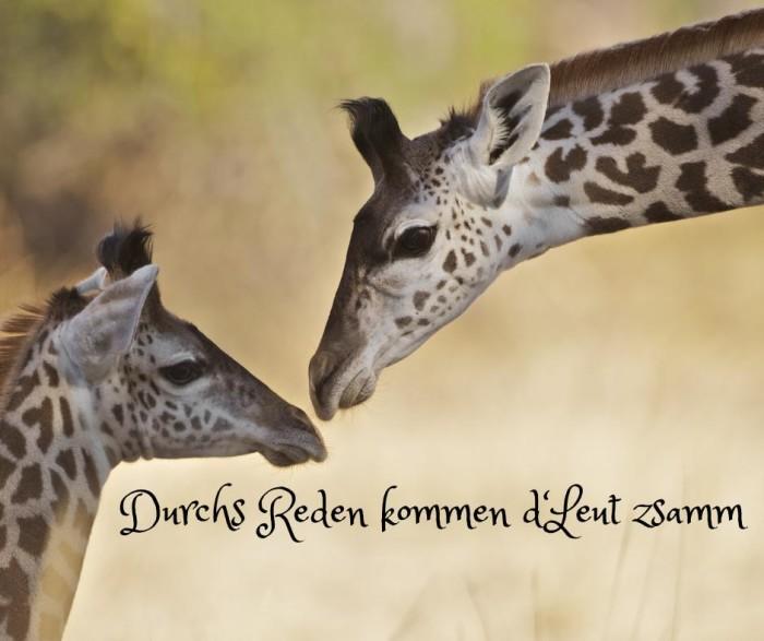 Giraffe durchs reden...